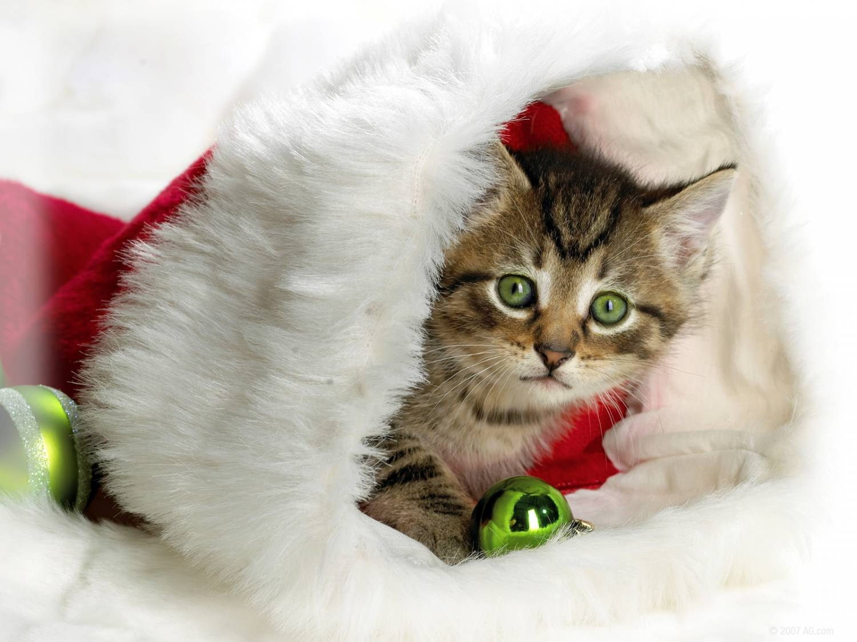 Скачать картинку Рождественские коты прикольные кошки на Новый год